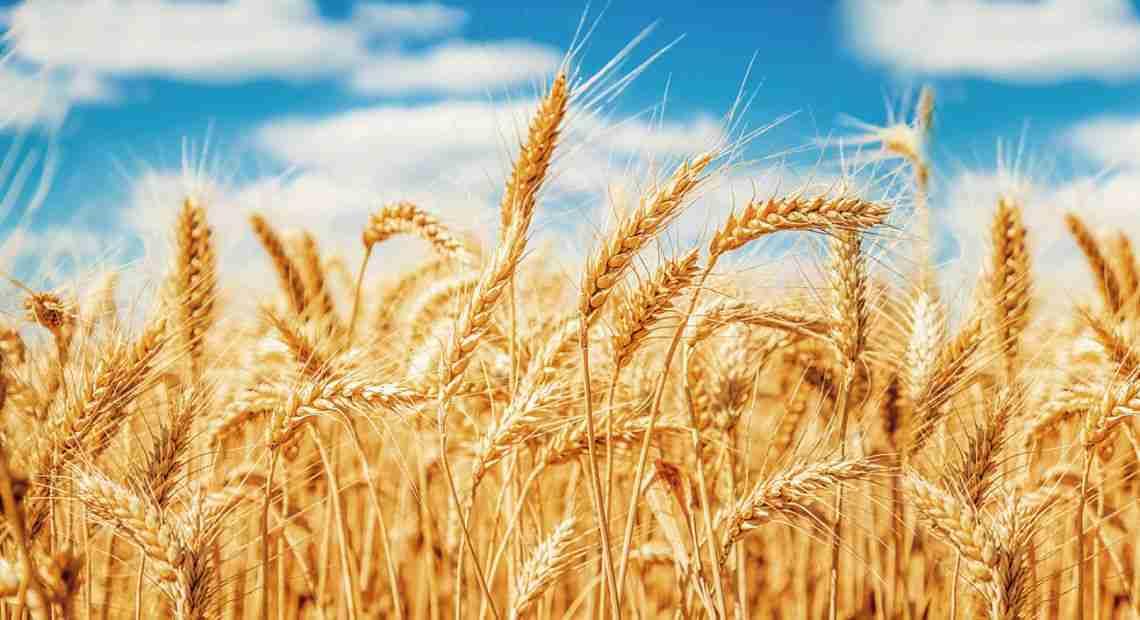 AGRICULTURAL UNIVERSITIES IN UKRAINE